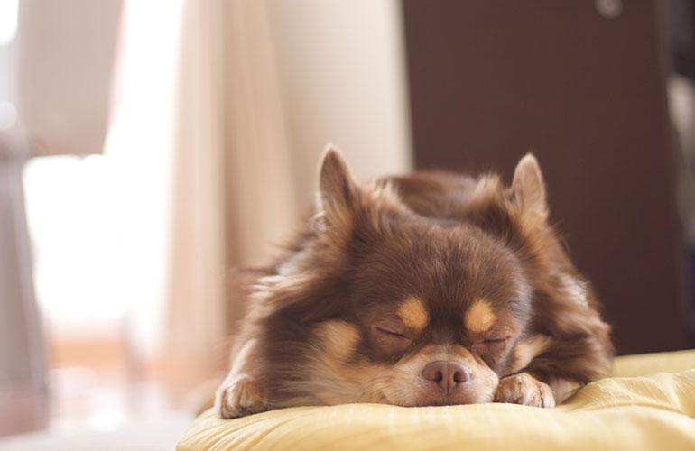 良い睡眠イメージ